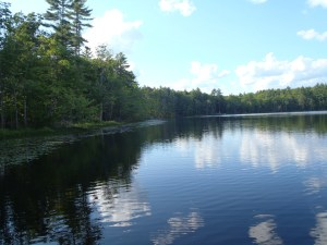 A beautiful view of the shoreline of Wards Pond