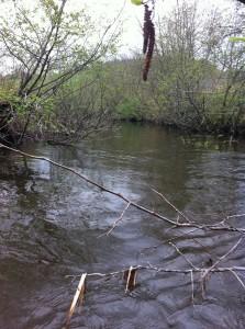 Collyer Brook