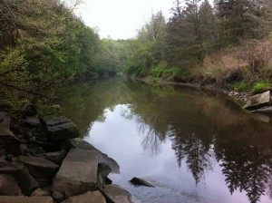 View if the Little River looking upstream from underneath the Route 237 bridge