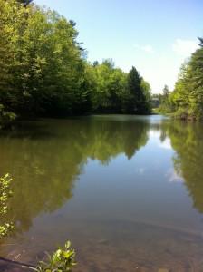 General view of Alden's Pond