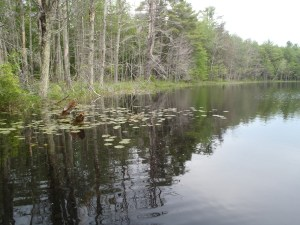 The shoreline of Chaffin Pond