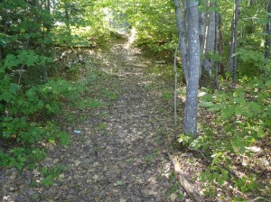 Footpath leading from the road to Schoolhouse Pond
