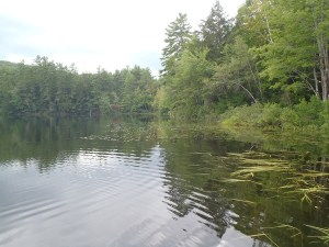 View of the shoreline on Little Clemons Pond along Route 160