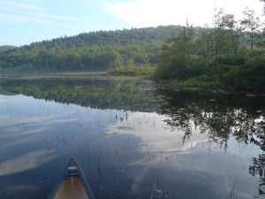 A view of the shoreline on Spectacle Pond #2