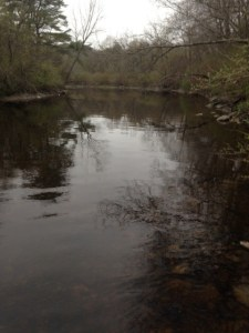 The stretch of the Kennebunk River downstream of the Great Muddy Pool did not impress me...