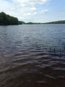 General view of Otter Pond from the launch area