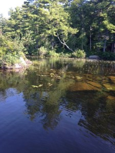 Great bass habitat! Rocky outcrops, sunken reefs, drop-offs, and aquatic vegetation.