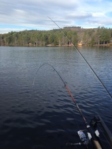 Tandem fishing on Peabody Pond with a downrigger and lead core line.