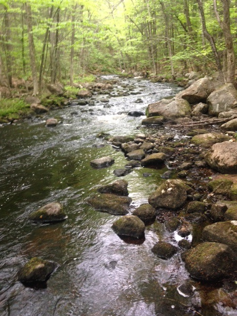 Brook trout fishing on the Northwest River, Sebago, Maine
