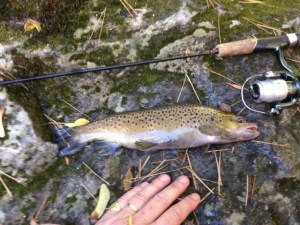 This brown trout made it all worthwhile!