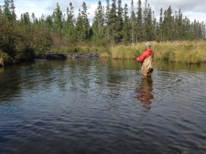 The pool in front of the beaver dam is also a good spot to fish for brookies