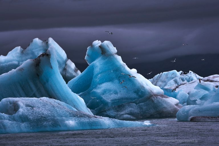 seaguls flying over icebergs at Glacier lagoon