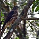 @ Wilpattu National Park