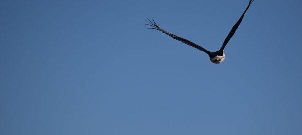 Eagles on lookout @ Lunuamvehera National Park