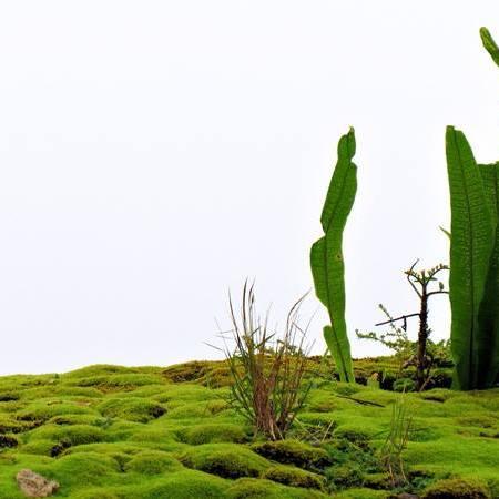 minature habitat at Wewalthalawa
