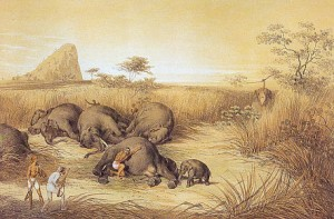 Eight elephants killed in a heap, and the little one captures, Loggala. 1853