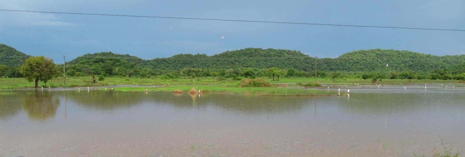 The Jayaraja Wewa which as become Vendarasan Tank