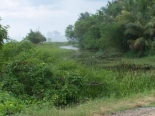 Somawathiya road crossing at 9 km post, Wewethanne