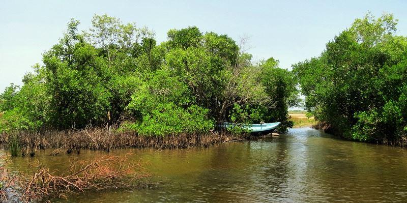 Kayankerni lagoon