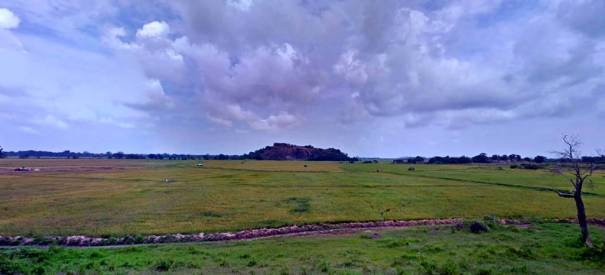 The rock in the middle of the paddy field in Radella  where archaeological evidence of an ancient temple exists