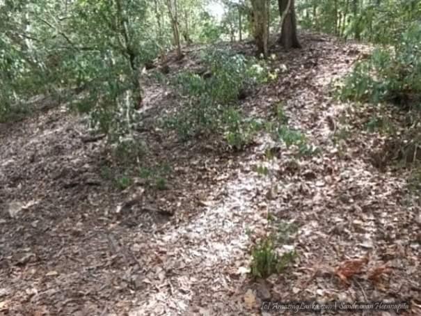 සිරිමංගලපුර දෙමළයාපිටිය පුරාවිද්යා ස්ථානය - Sirimangalapura Demalayapitiya Archaeological Site