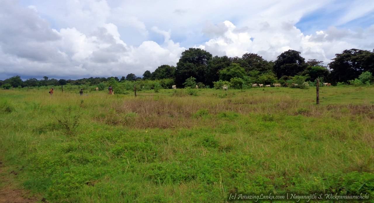 මාදුරුඔය නිම්නයේ සැඟවුණු වඩමුනයි මෙගලිතික සුසාන භූමිය - Wadamunai Megalithic Burial Grounds