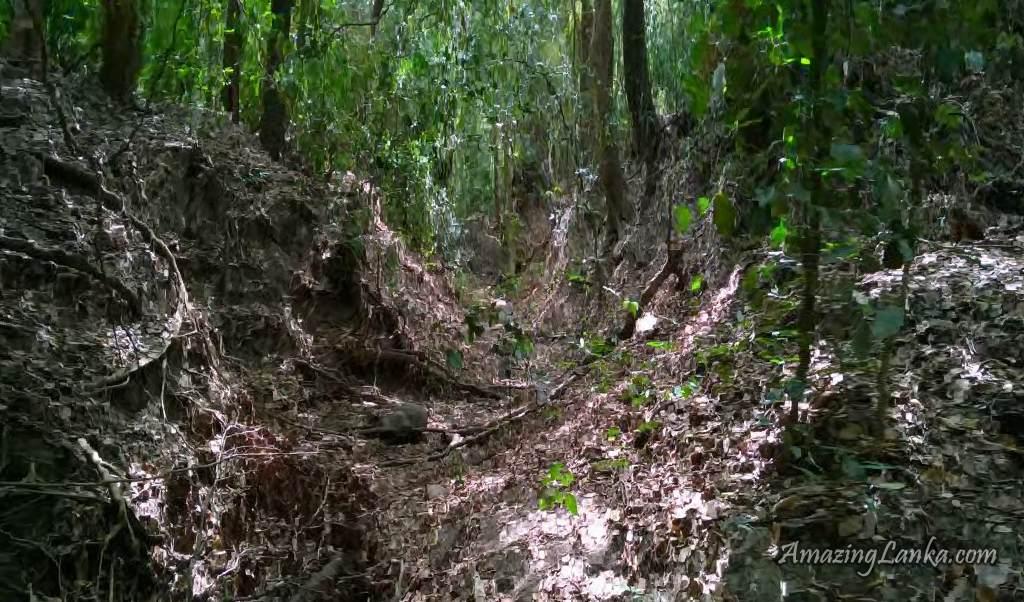 විලේවැව පුරාණ අමුණින් දකුණට දිවෙන ඇළ මාර්ගය - The ruined canal on the right bank of Yan Oya above the ancient Wilewewa Weir