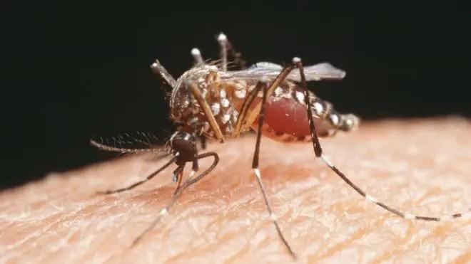 Super Malaria
