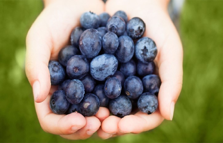 The Unwonted uses of Extract of Blueberry to Boost Cancer Therapy will Shock You