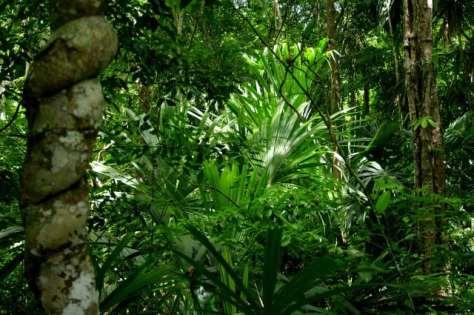 Regenwald - Tikal