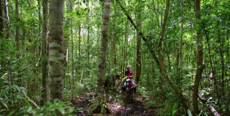 El Mirador Trail - The Mula - Guatemala Jungle Adventure - Mules carrying the luggage