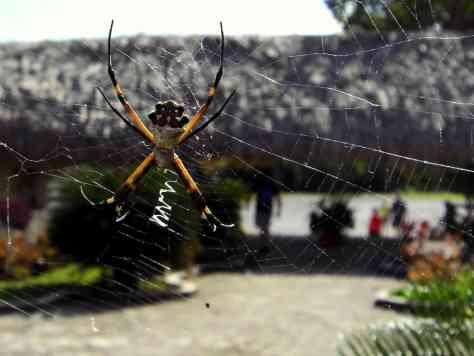 Spider - San Gervasio Cozumel