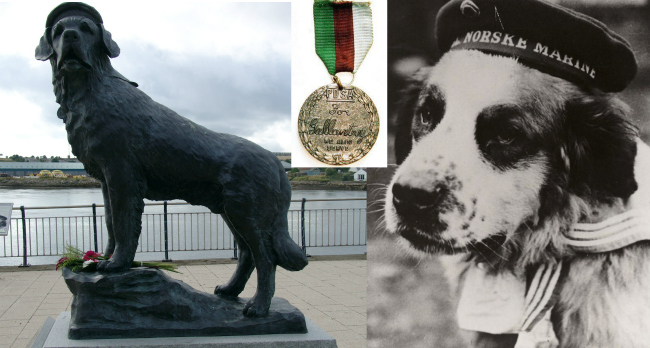 The Amazing St Bernard, the Only Animal to Have Won a  Gallantry Medal In WWII