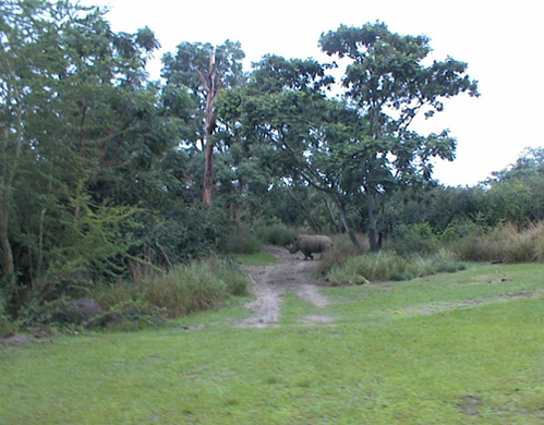 safari09