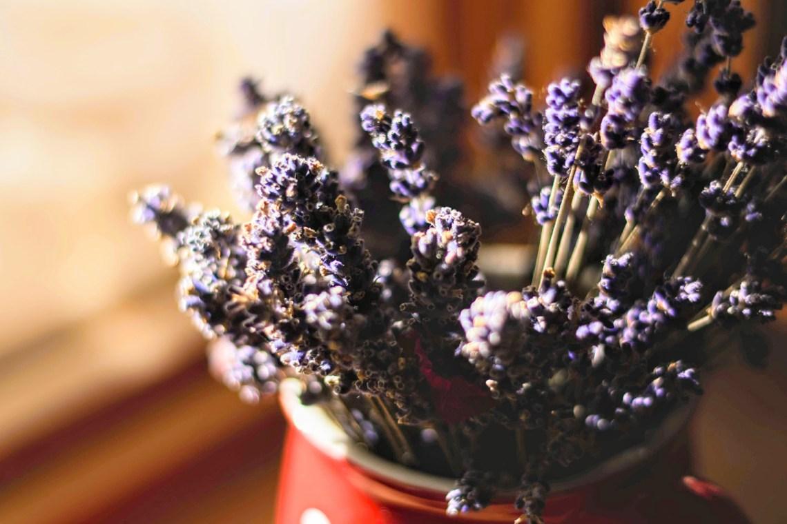 Topf mit Lavendel Entspannung Tipps bei Schlaflosigkeit