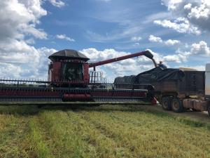 Governo do Amazonas incentiva produção de arroz no interior do Estado