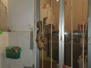 Família encontra cobra de quase dois metros em casa no Japiim, em Manaus