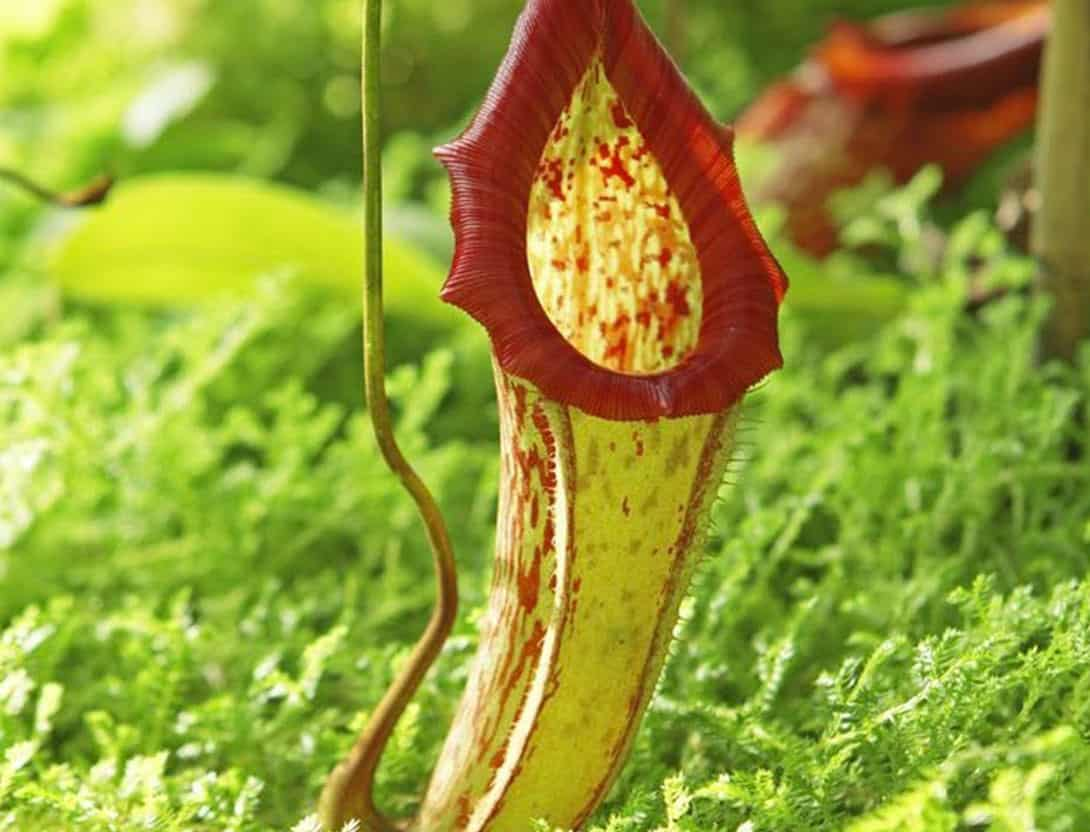 Check This Out The Coolest Rainforest Plants To Watch Out For
