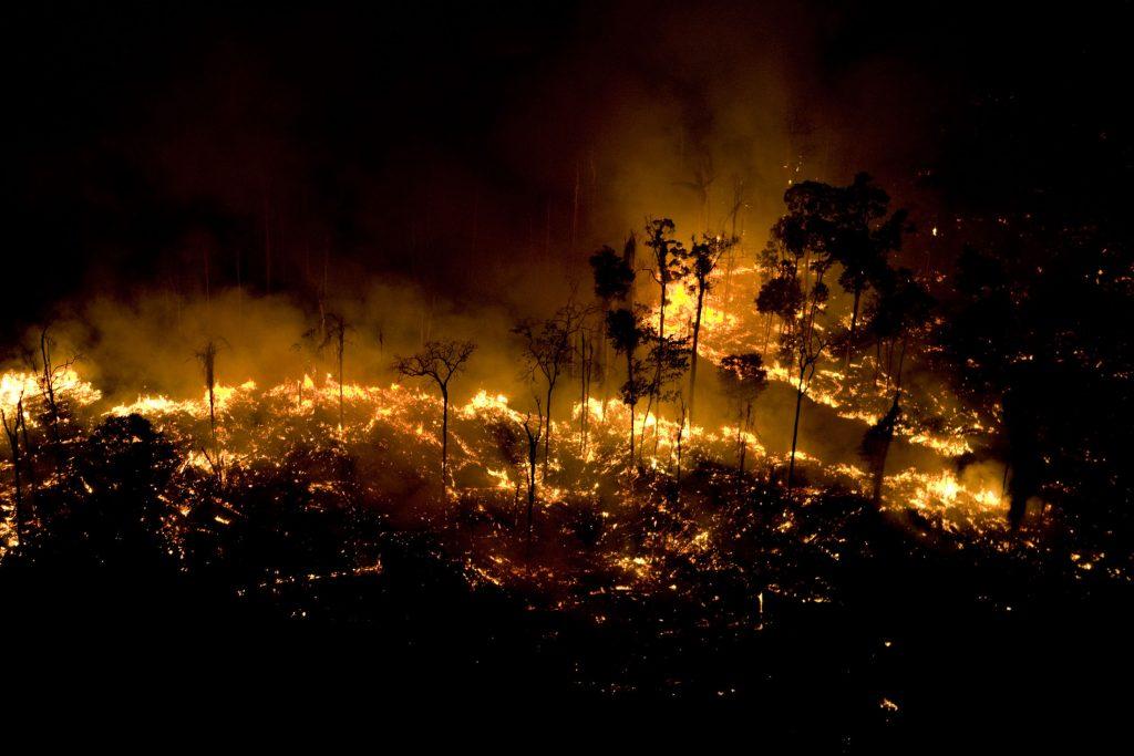 Queimadas destroem 78% da biodiversidade da Amazônia ...