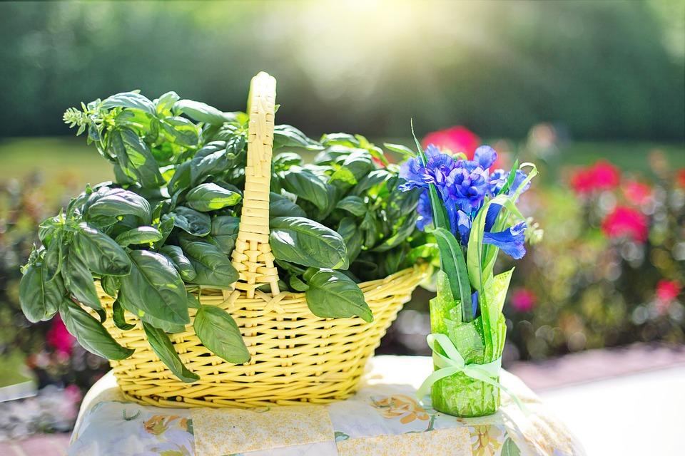 Svaki balkon ili vrt mora imati bosiljak, ružmarin i peršin: Evo zašto!