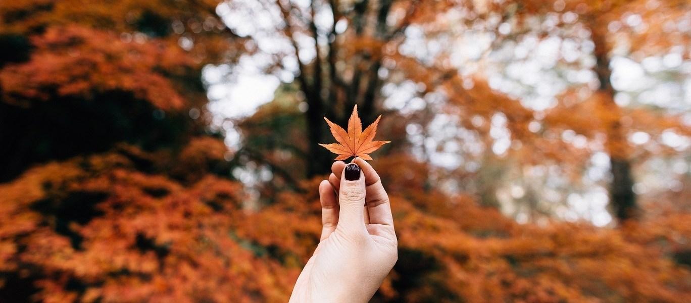 O jednoj jeseni, Pavel Globa: Ovih 5 horoskopskih znakova na jesen čeka dramatični životni preokret!, je najbudalastija tuga među tugama: Najjepši citati o najšarenijem godišnjem dobuŠto je u jeseni tako tužno?