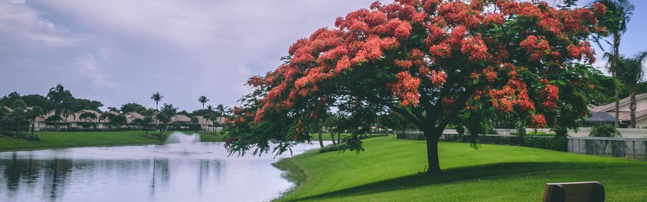 TEST: Koje drvce vas privlači? Ono otkriva vašu osobnost u ljubavi