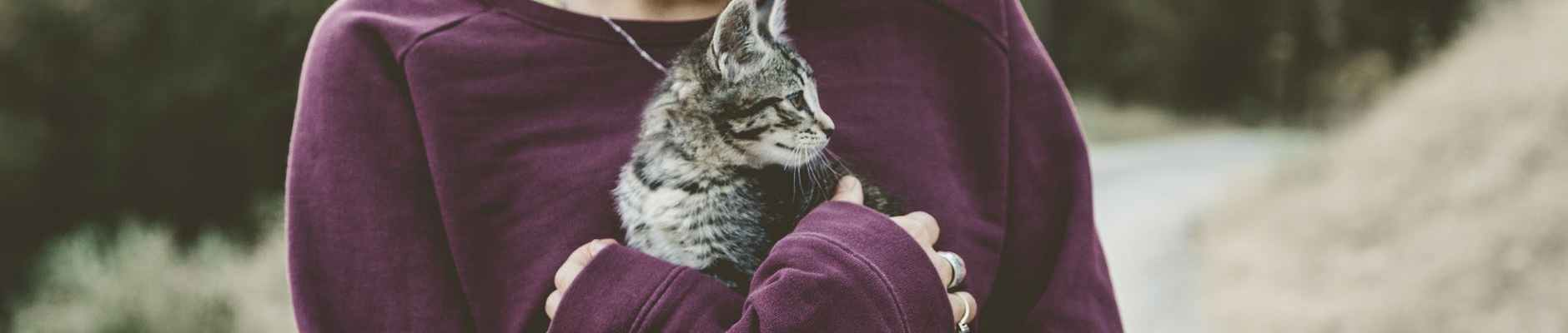 blur care cat close up