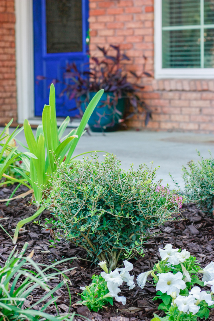 curb-appeal-flower-bed-makeover-22