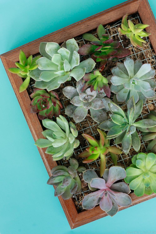 DIY succulent wall planter!