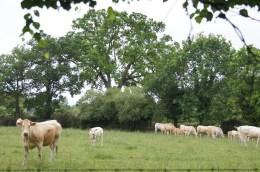 Pastoral ows