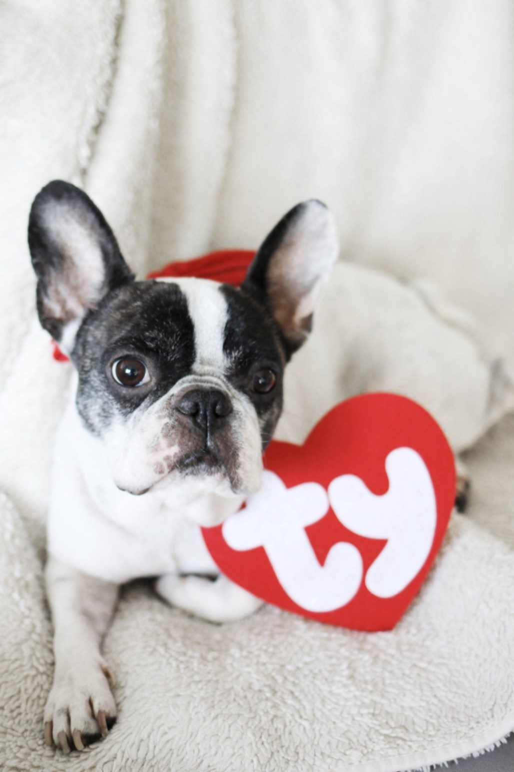 Beanie Baby Lily   A Married Adventure