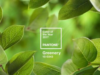 "Embrace A Healthy Space with ""Greenery"" Pantone's 2017 Colour of the Year"
