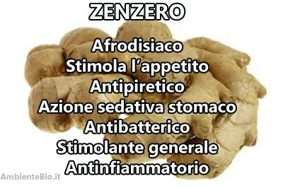 zenzero1