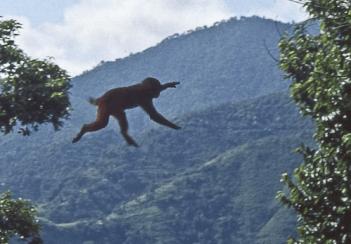 scimmia salto